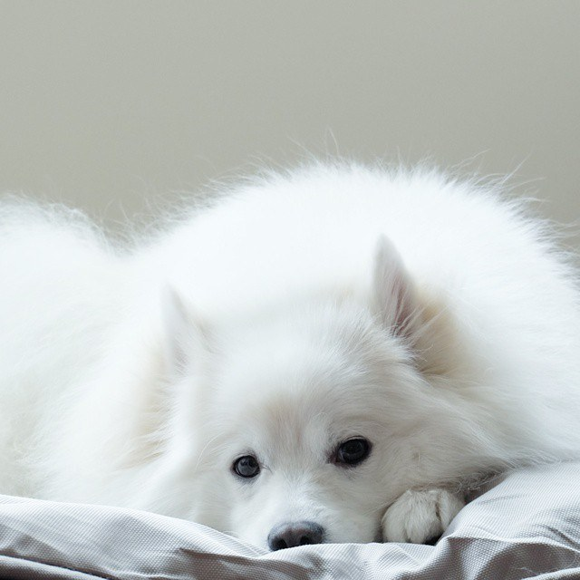 Dog Question No.11