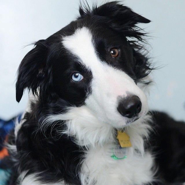 Dog Question No.12