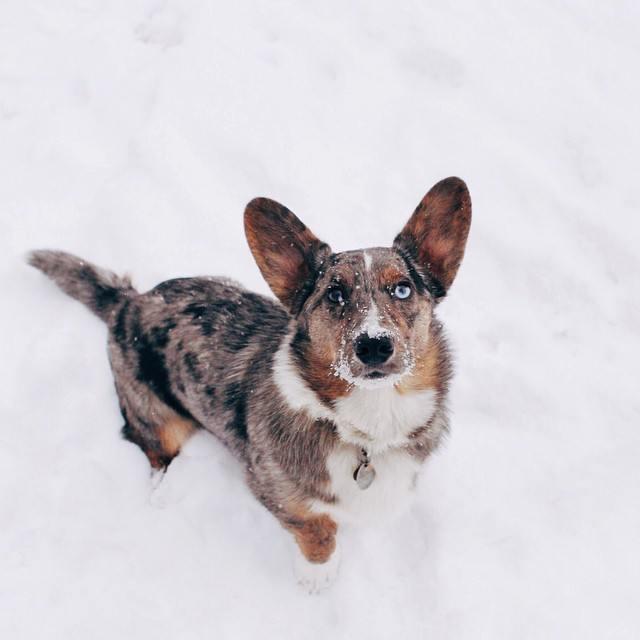 Question dog No.16