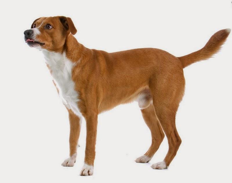 dog-body-language2