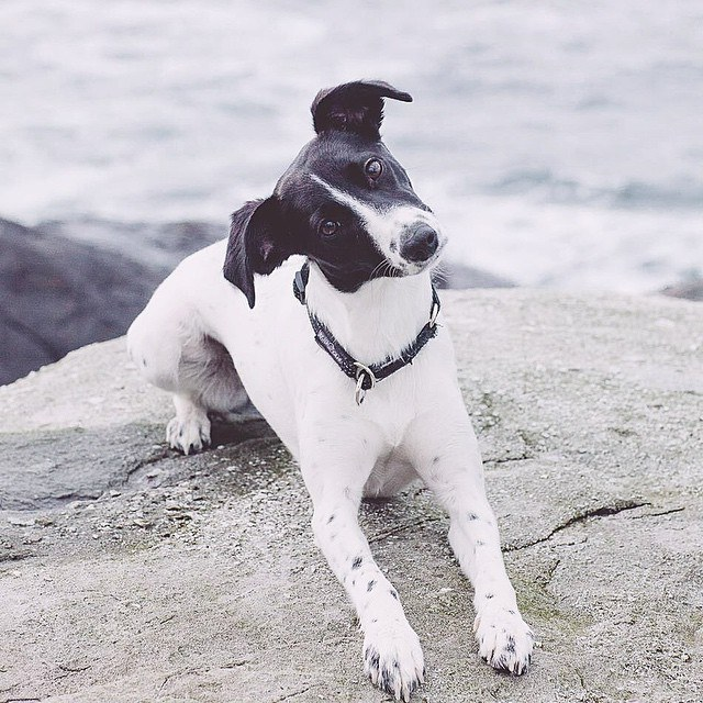 Dog-questionNo.3