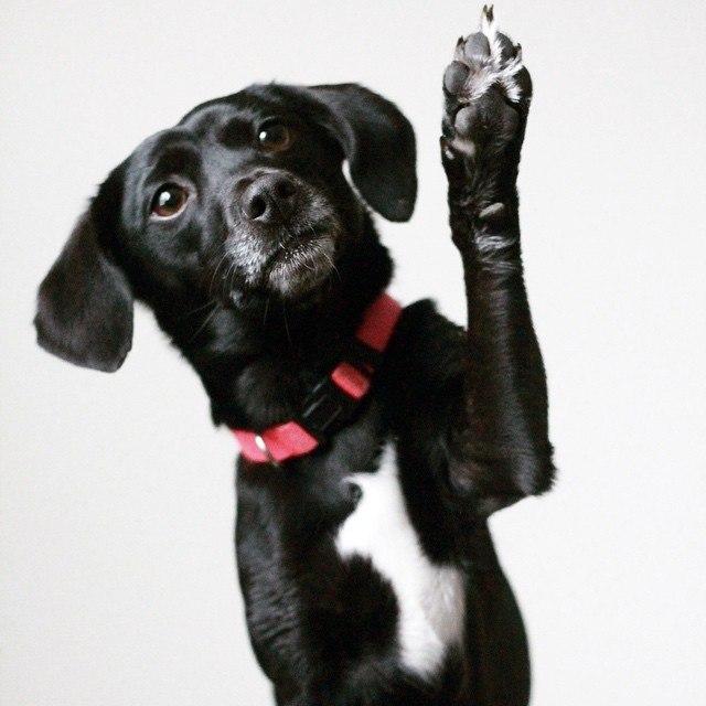 Dog-QuestionNo.4