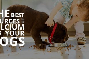 calcium tablets for dogs