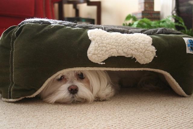 Dog-fear