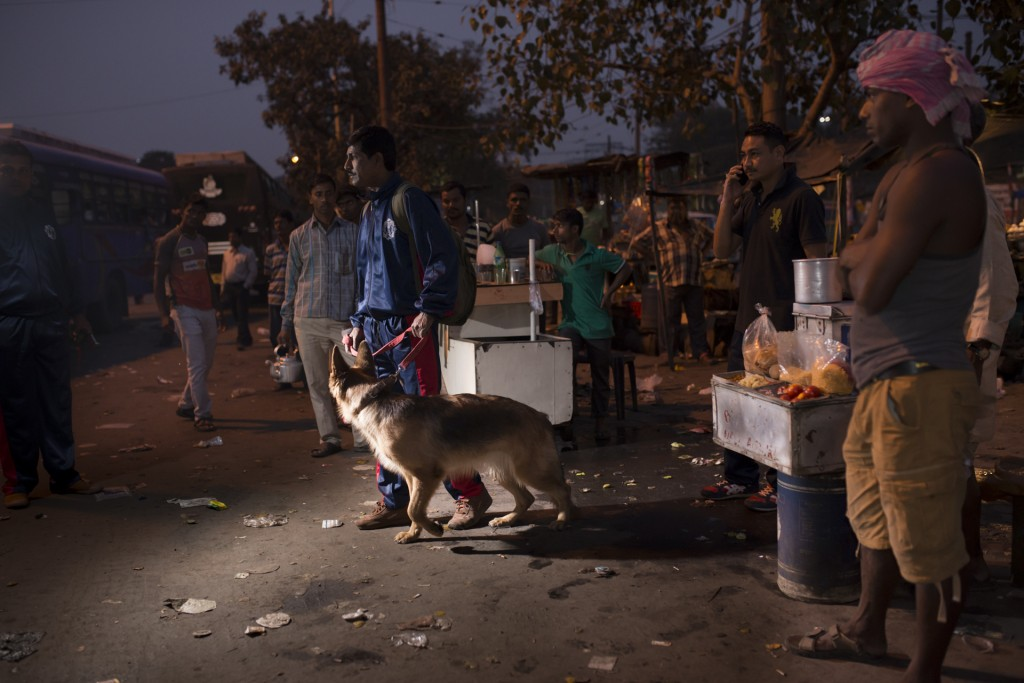 Indian-Dogs13