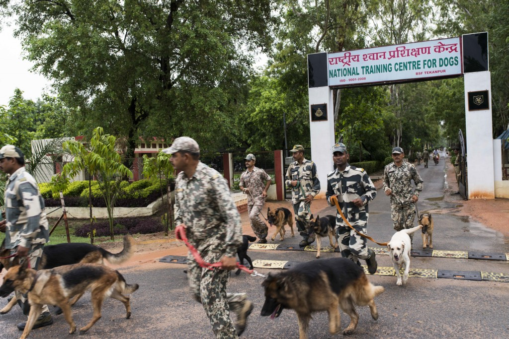 Indian-Dogs14