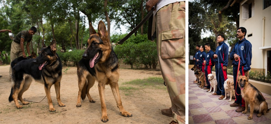 Indian dogs03