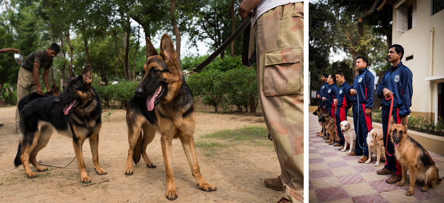 Life Of Dogs In The Indian Armed Forces Dogexpress