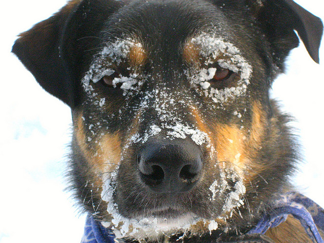 7 Reasons Behind Your Dog's Shivering | DogExpress