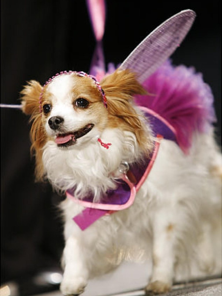 Dogs Fashion Show