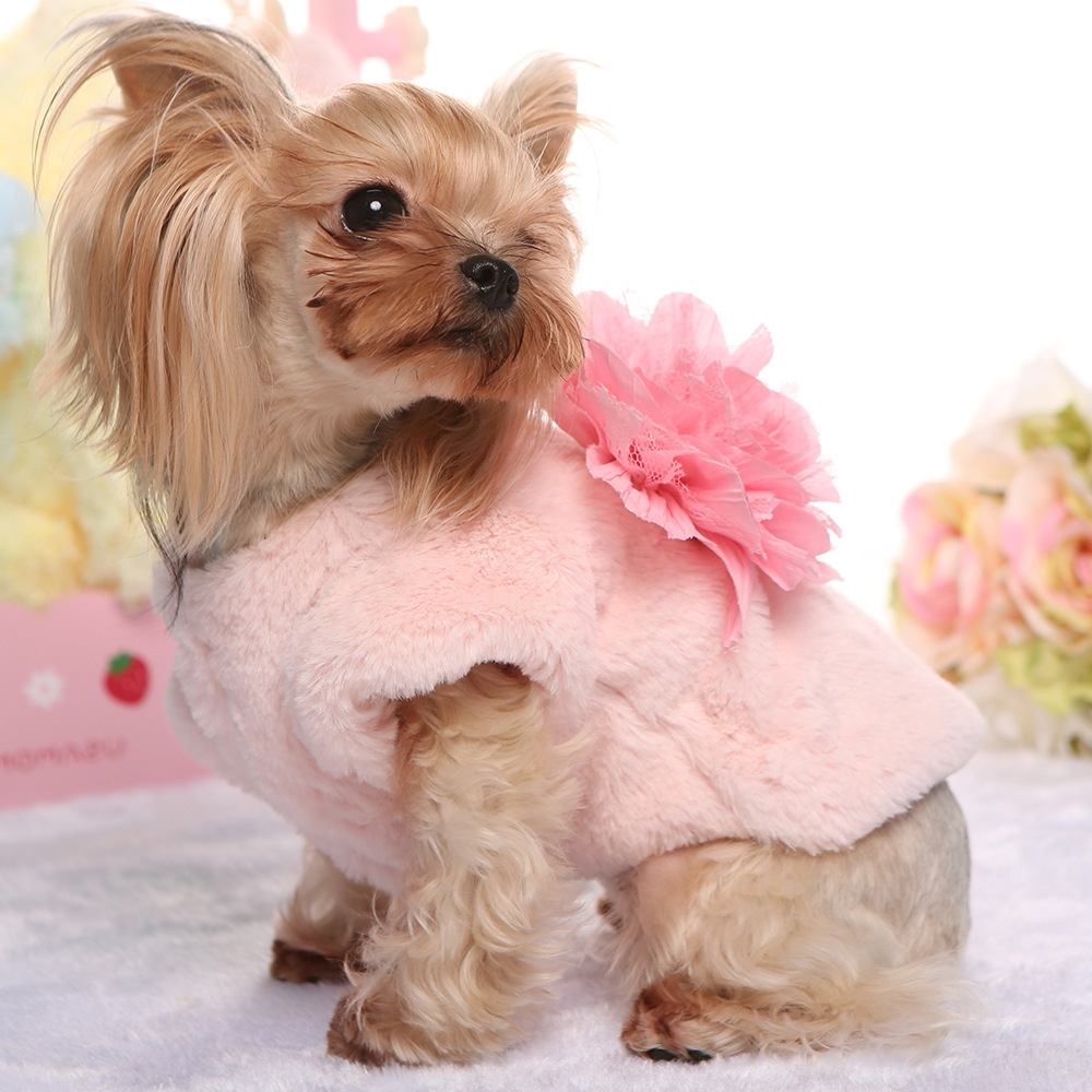 pet fashion trends
