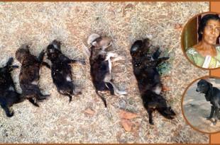 Risultati immagini per woman kills 8 puppies
