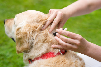 Solutions Dog Shedding