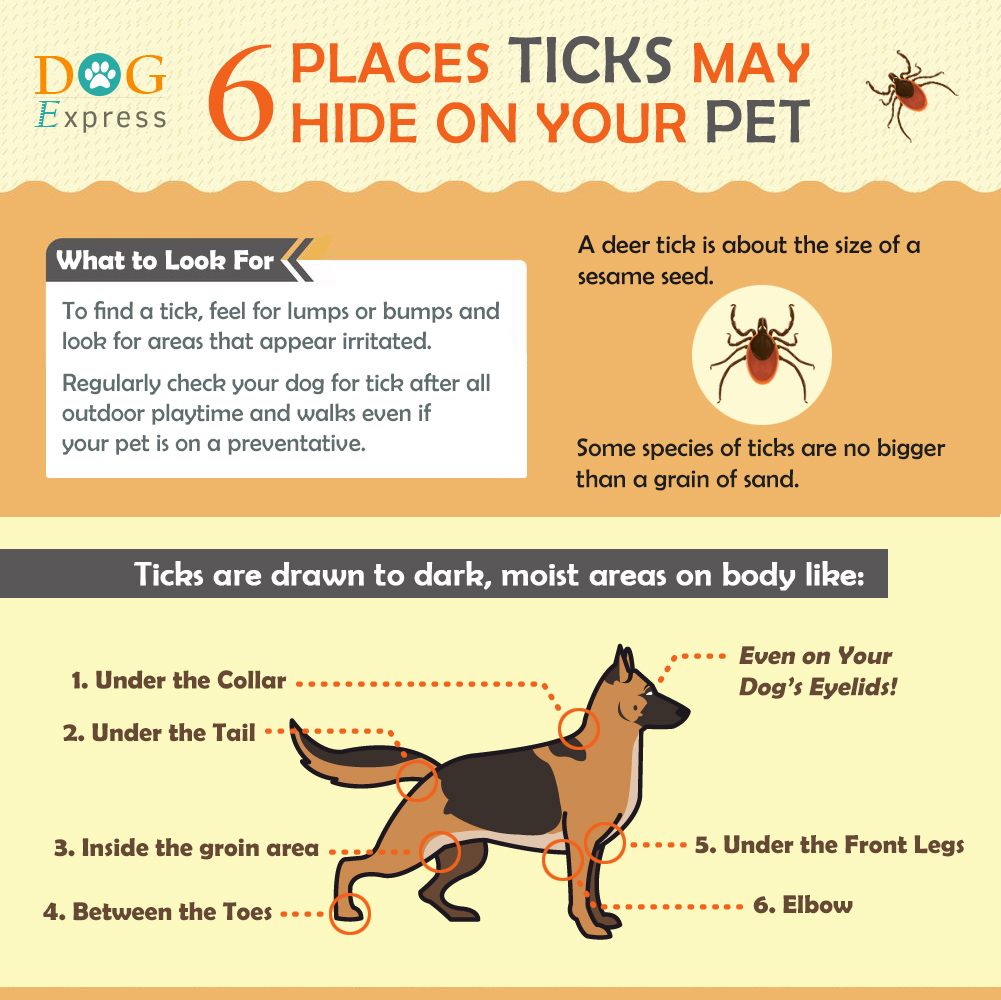 dog pest control