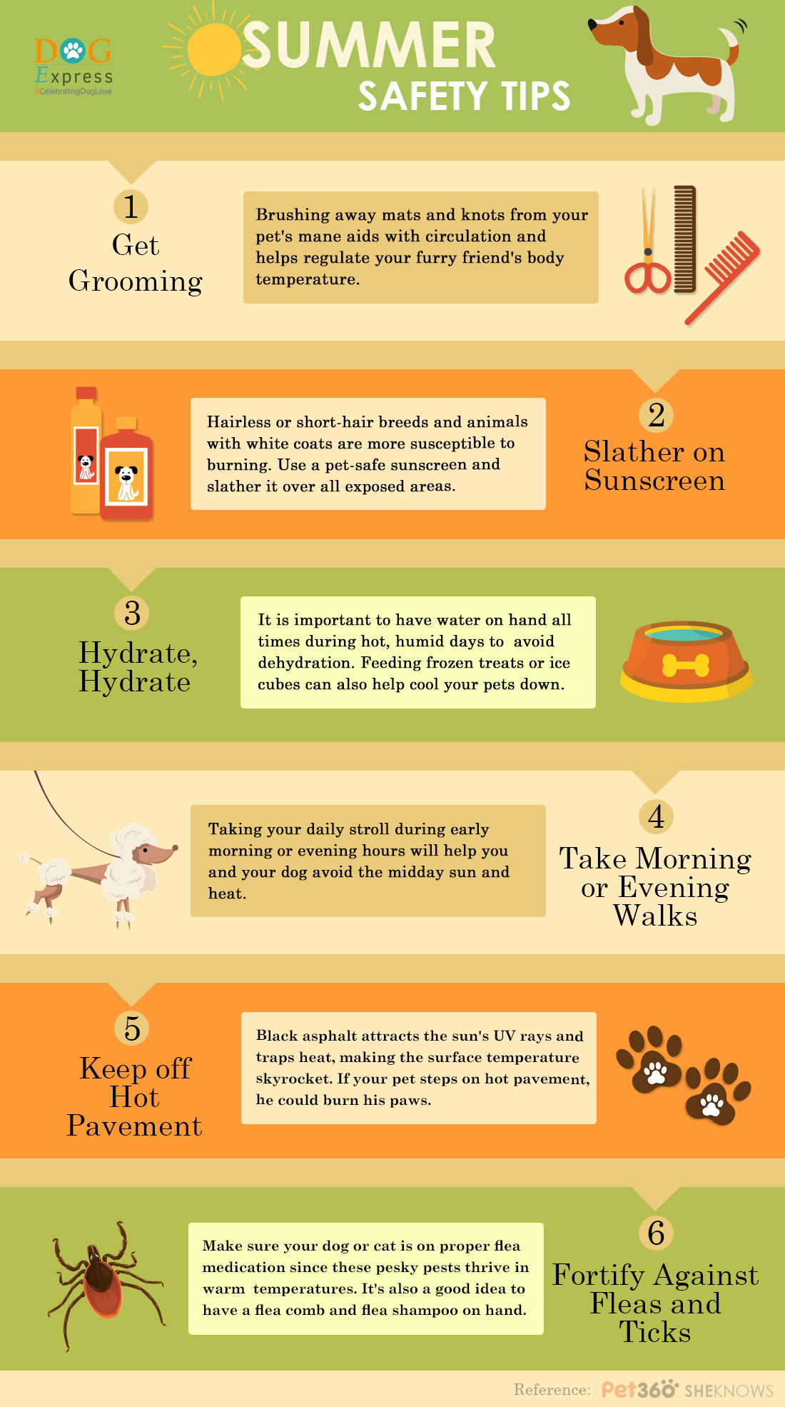Summer safety tips for dogs infographic