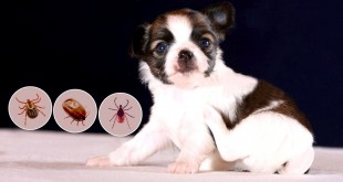 flea and tick treatment for dogs