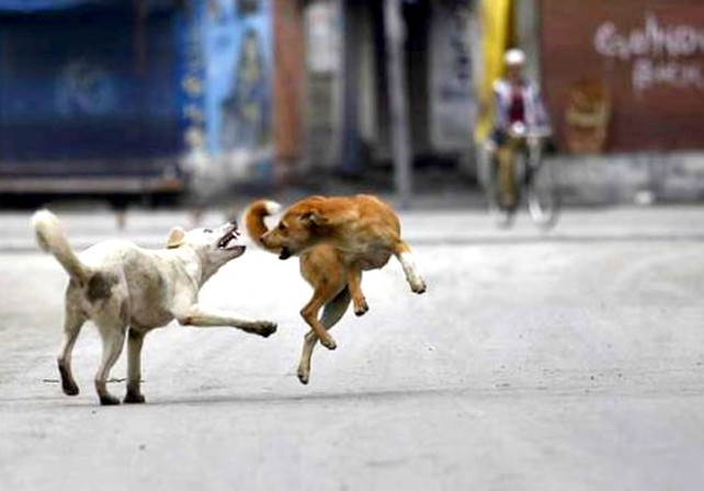 stray dogs1