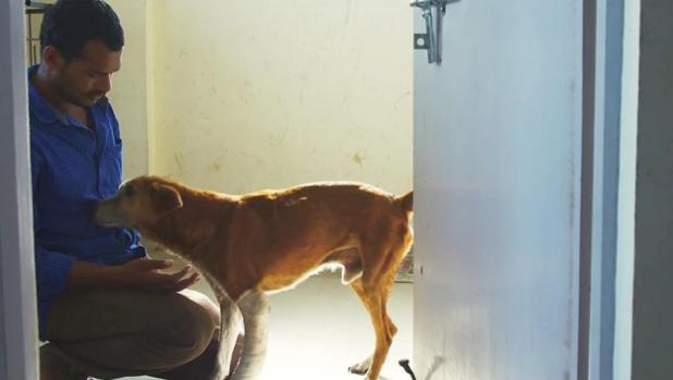 Balu And Homeless Dog
