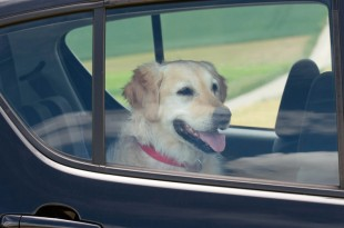 DOG IN HOT CARS