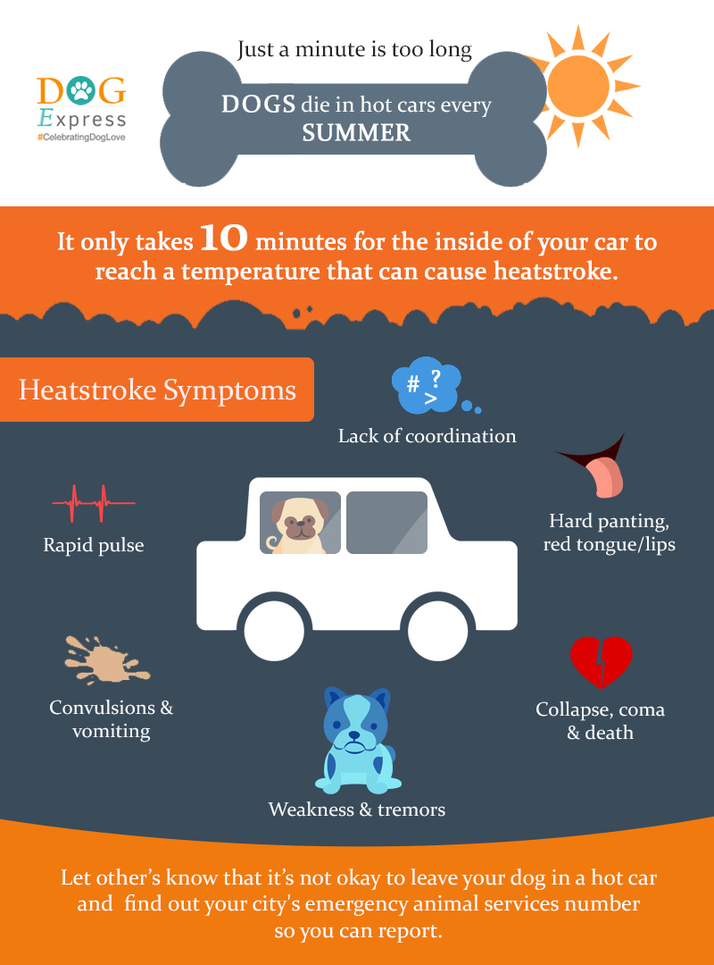 DOG IN HOT CARS INFOGRAPHIC