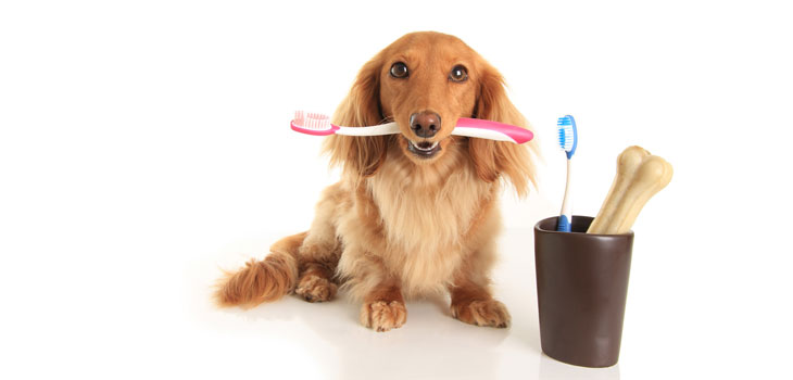 dog teeth cleaning 3