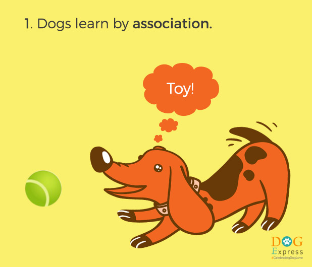 Dog-training-tips-1