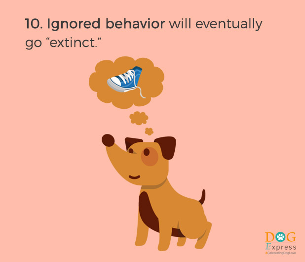 Dog-training-tips-10