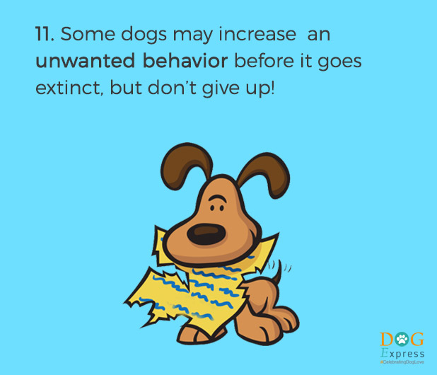 Dog-training-tips-11