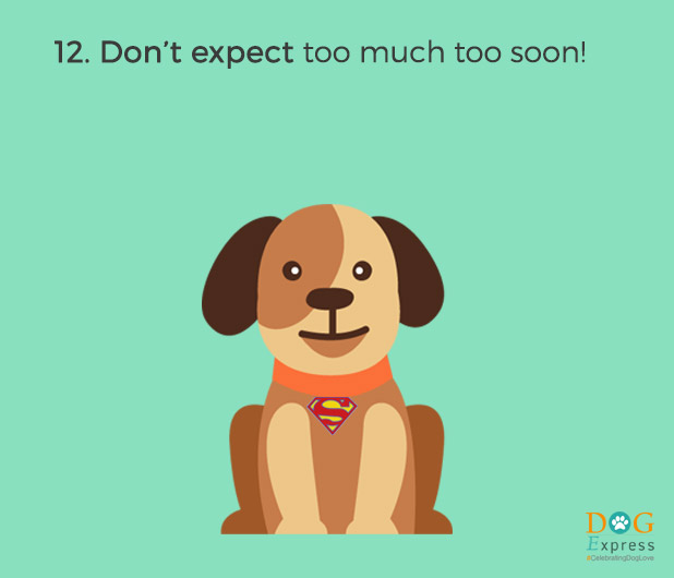 Dog-training-tips-12