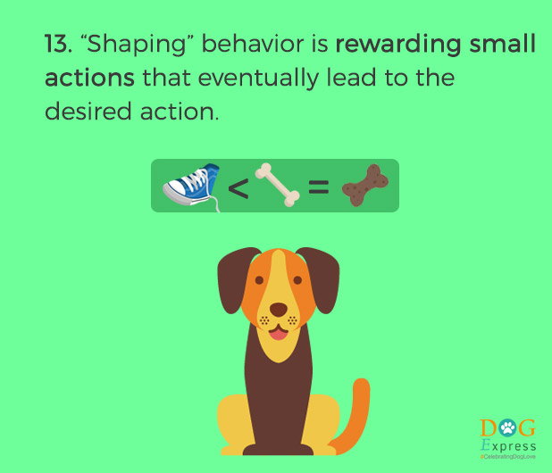 Dog-training-tips-13