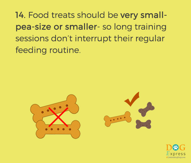Dog-training-tips-14
