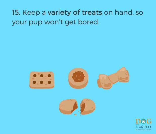 Dog-training-tips-15