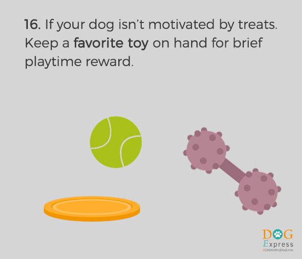 Dog-training-tips-16