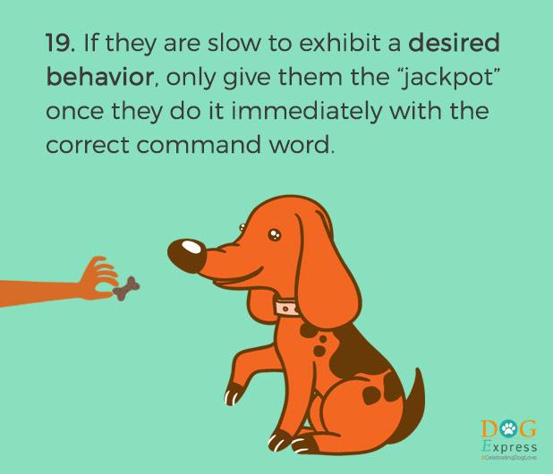 Dog-training-tips-19