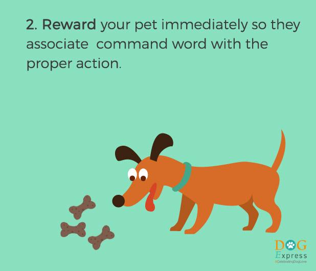 Dog-training-tips-2