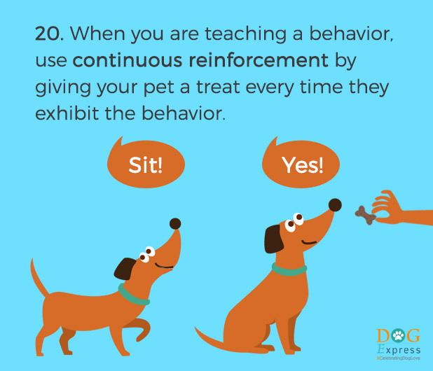 Dog-training-tips-20