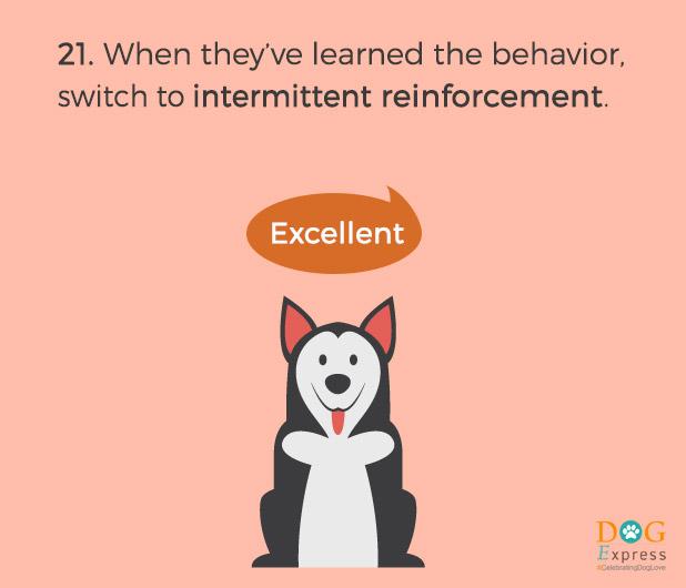 Dog-training-tips-21
