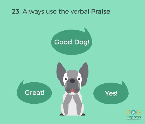 Dog-training-tips-23