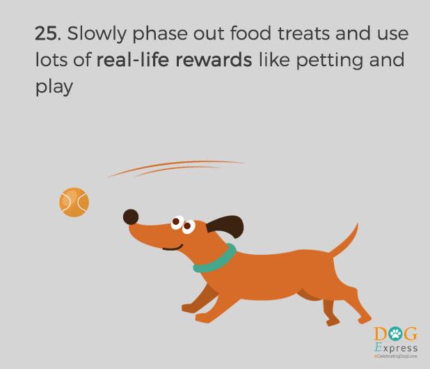 Dog-training-tips-25