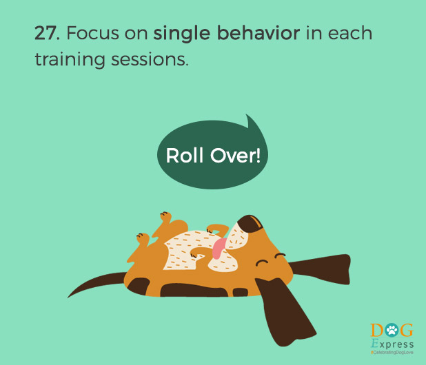 Dog-training-tips-27