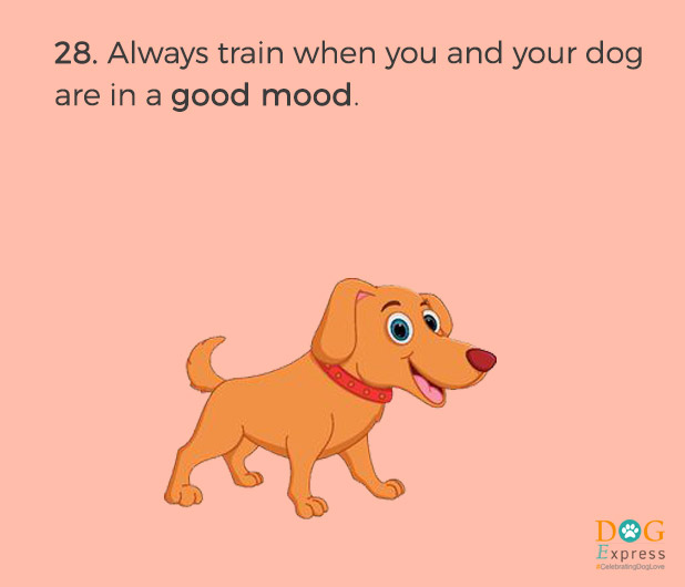 Dog-training-tips-28