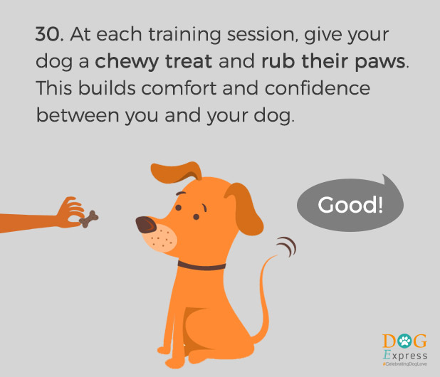 Dog-training-tips-30