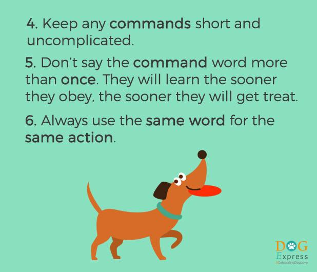 Dog-training-tips-4