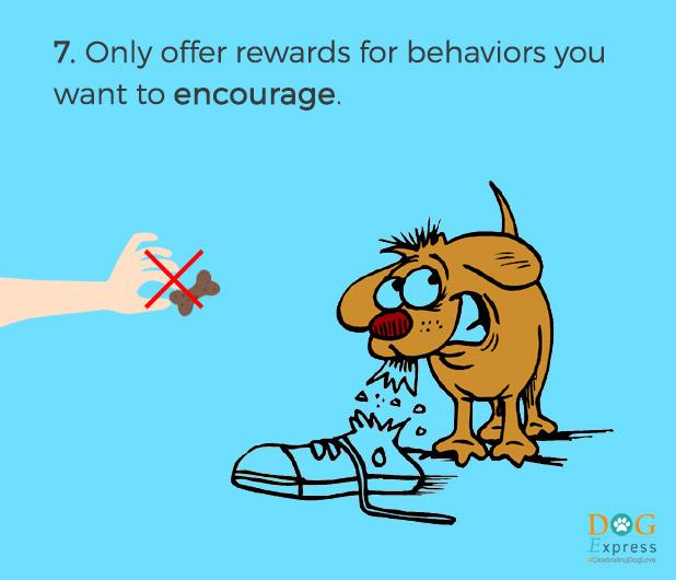 Dog-training-tips-7
