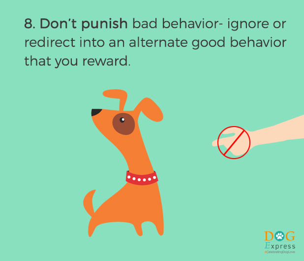Dog-training-tips-8