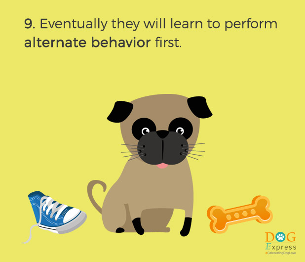 Dog-training-tips-9
