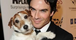 Ian somerhalder love dogs