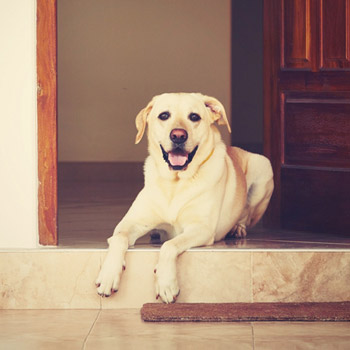 Apartment Laws for Pet Owners