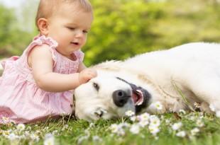 dog meeting babies