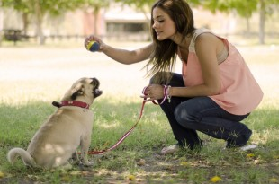 featured - dog training tips